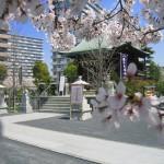 20130317_浅間神社社殿3
