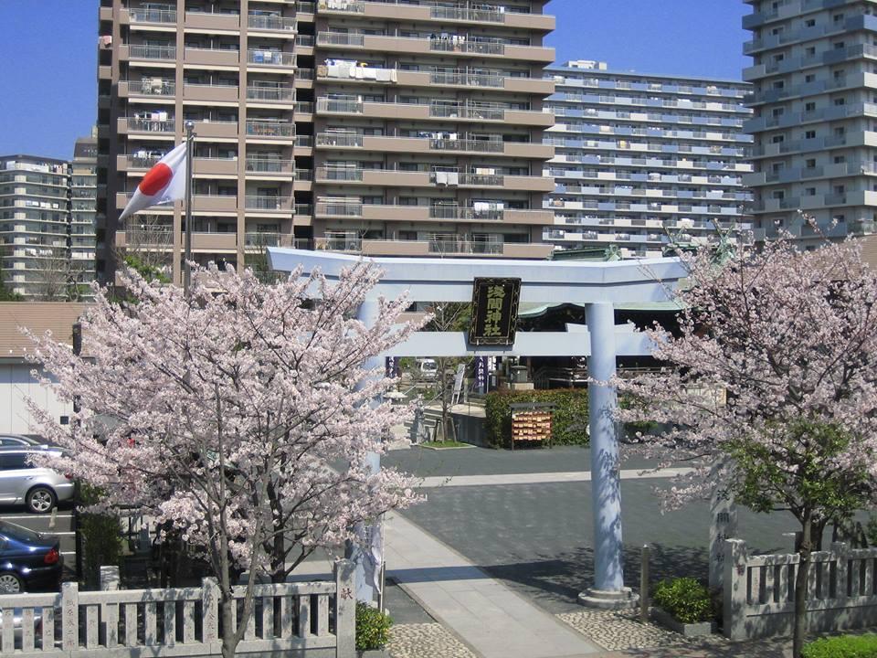 浅間神社の桜